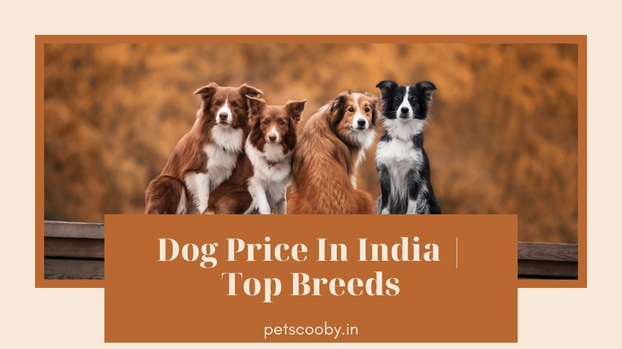 Dog Price In India List