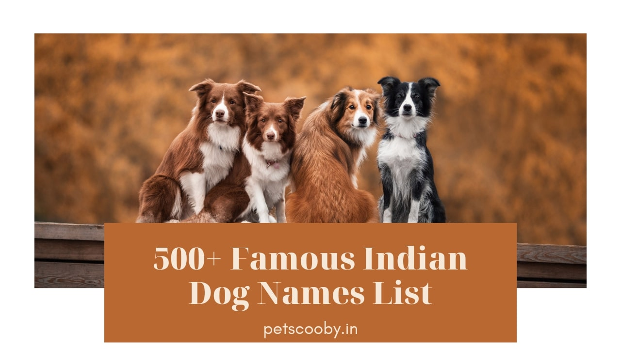Famous Indian Dog Names 2021