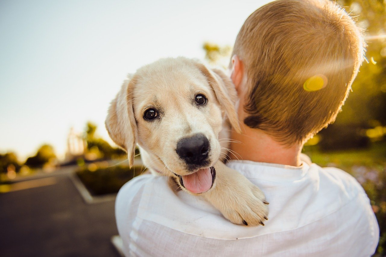 Dog price in india guide