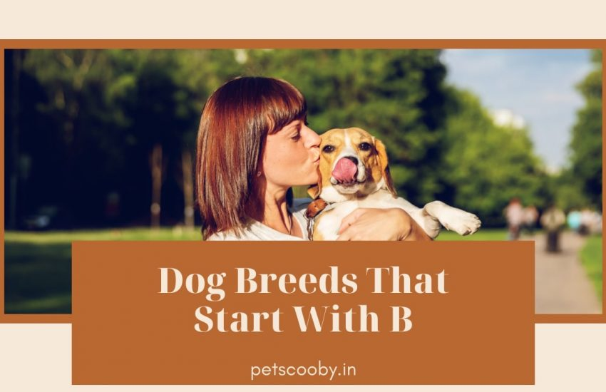 Dog breed that start with B