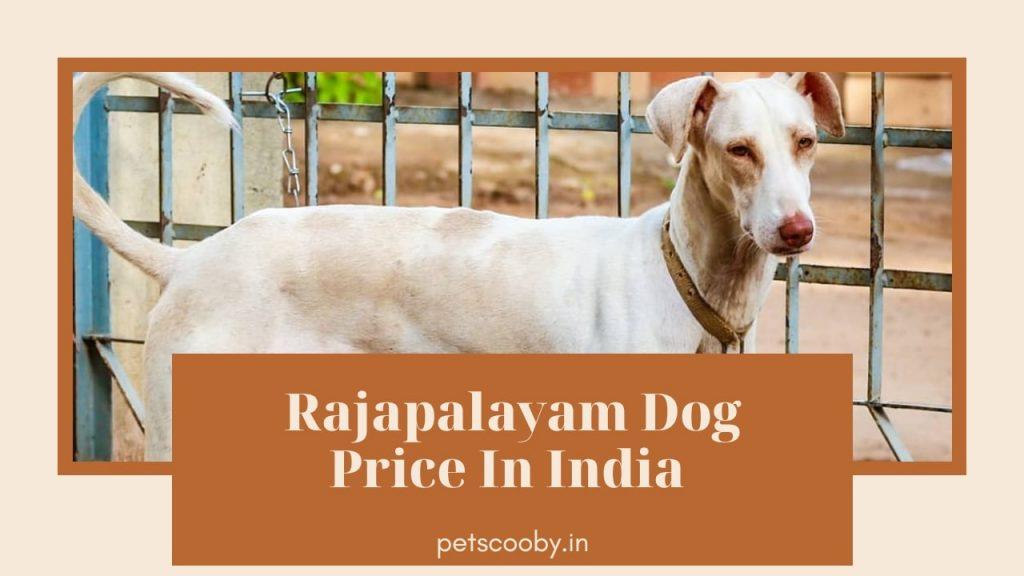 Rajapalyam Dog Price in India