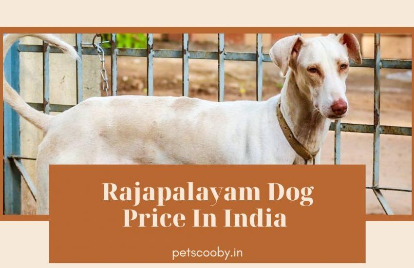 Rajapalyam Dog Price