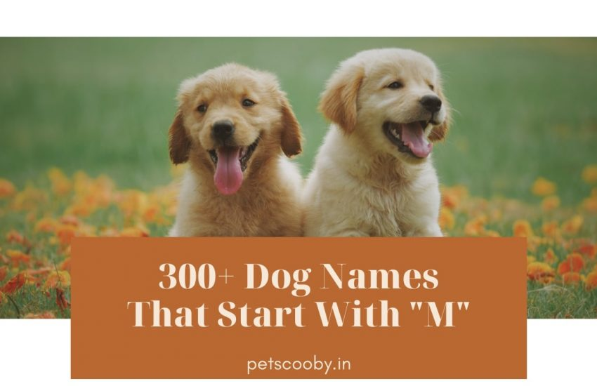 Dog names that start with M