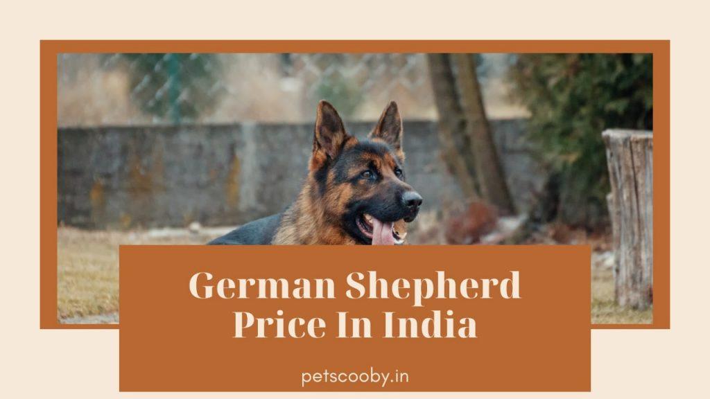 German Shepherd Price In India