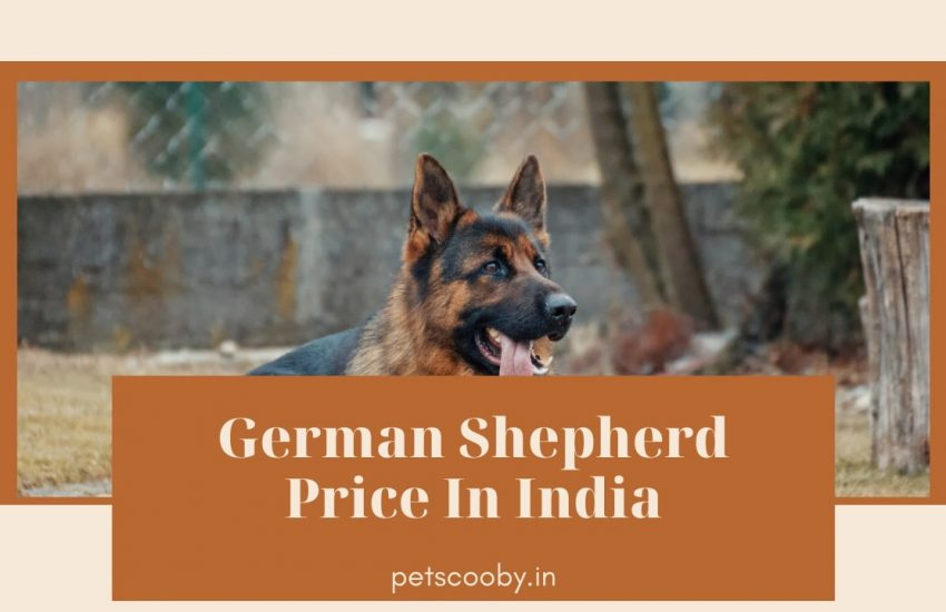 German Shepherd Price In India