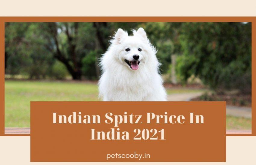 Indian Spitz price in india