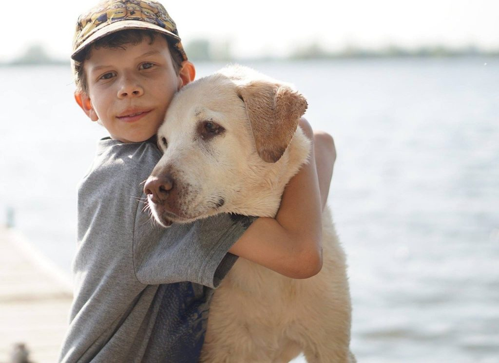 Factors that affect Labrador price